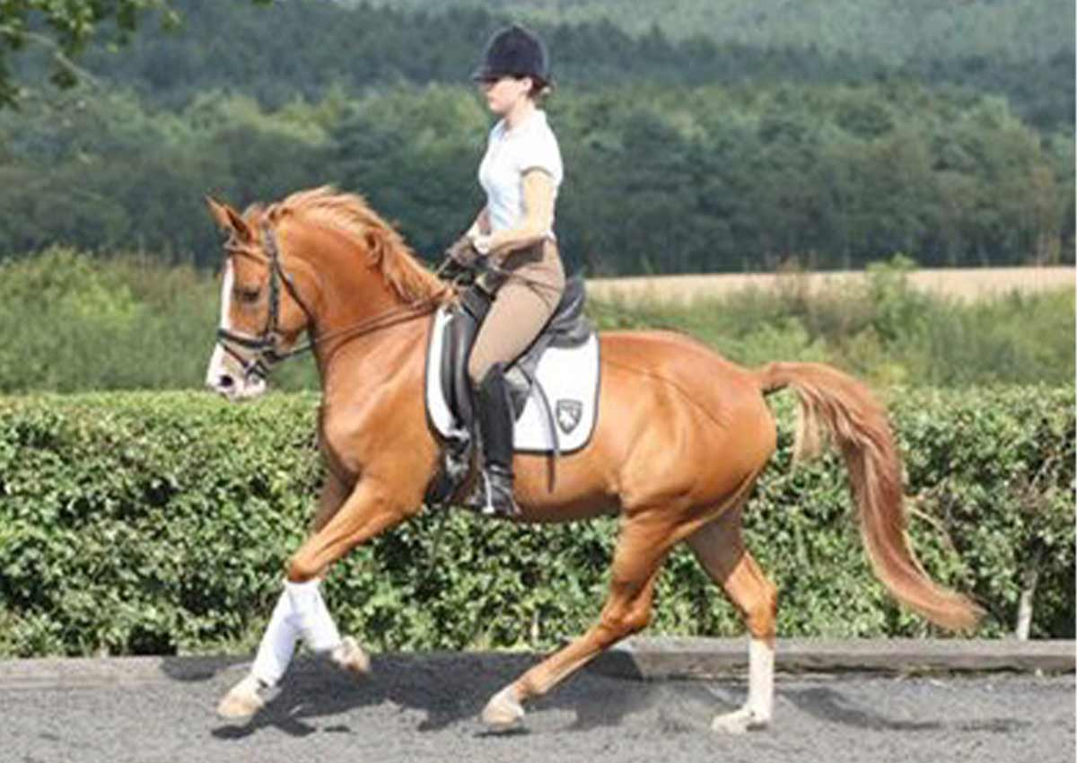 Anna-Brown-Dressage-10